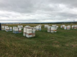 Field trip to Bismarck, ND – Finding the economic value of high-tech in provision of pollination services