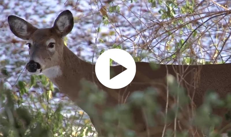 Videos: Campus life, Greenway wildlife